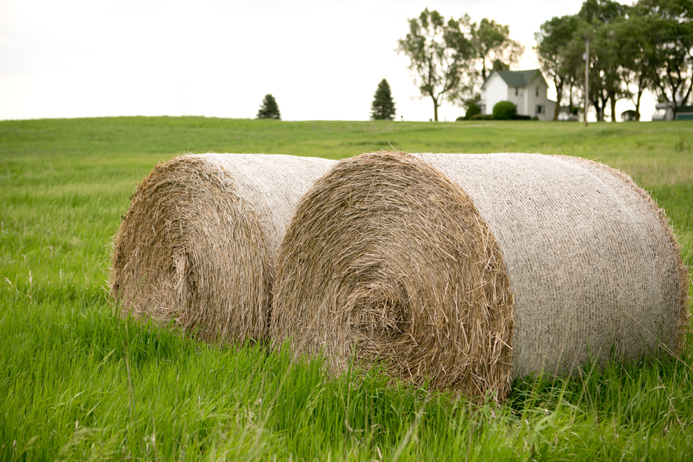 Hay bales near the alfalfa field.